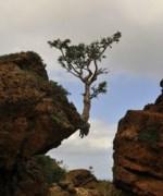 Célébration des défunts de La Baie et Bas Saguenay 2019 L'arbre force de La nature