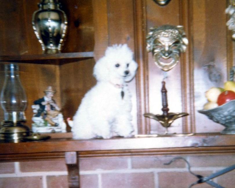 Betty Louise Payne Obituary - ,